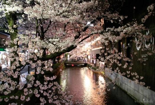 japan-cherry-blossoms-sakura-3149