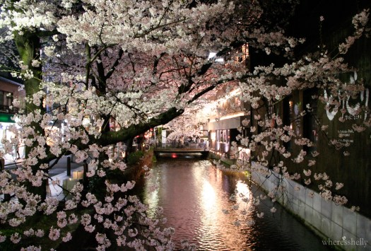japan-cherry-blossoms-sakura-3149