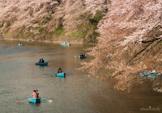 japan-cherry-blossoms-sakura-3681