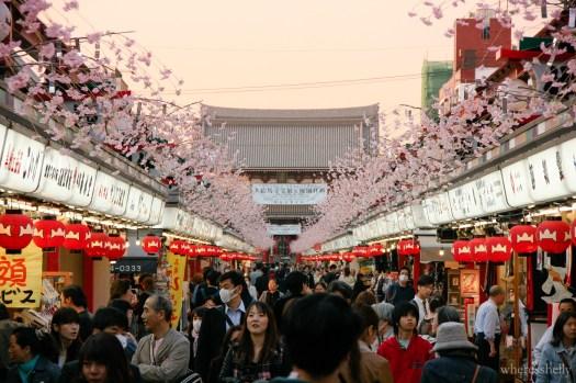 japan-cherry-blossoms-sakura-3822
