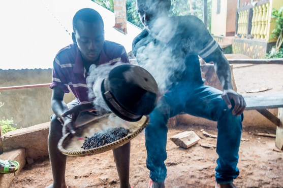 Fresh roasted coffee beans. Chagga Culture and Coffee