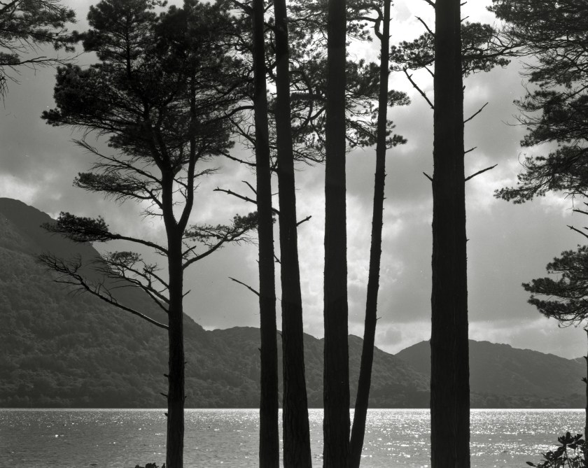 Trees and lake. Ireland