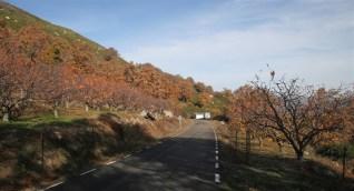 stone-fruit-orchard