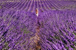 Provence - where the foodies go 8