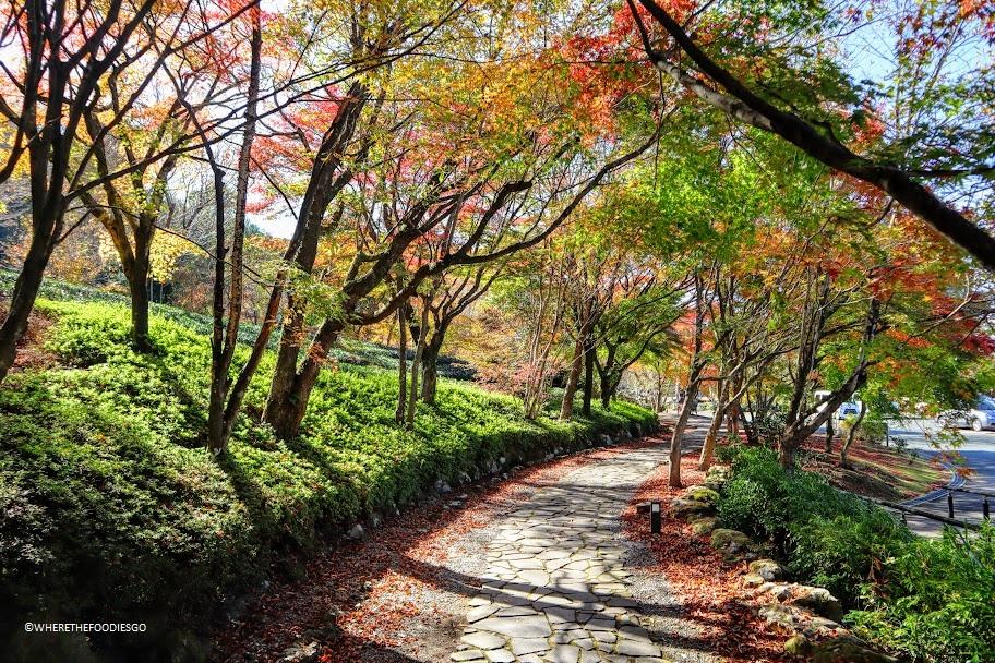 Museo del tè, Hoshinomura - Giappone