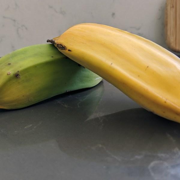 a Banana, and My Trees