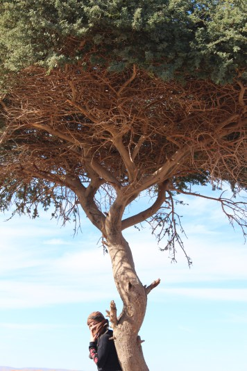 Tree of Life - Before
