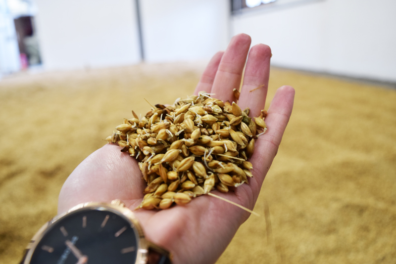 36-Malted-Sprouted-Barley-Floor-At-Kilchoman-Distillery-Birthplace-of-the-Land-Rover-Vehicle-Islay-Scotland
