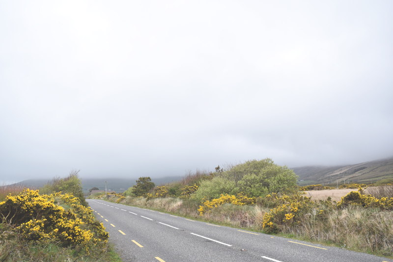 Driving-through-Dingle-Ireland-Gorse-and-Country-Roads-to-Beehives-and-Stone-Church