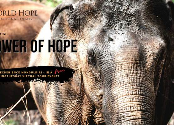 Virtual Tour Event: Trek into the Cambodian Jungle with World Hope!