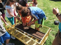 fifth grade sowing pea shoots_3794