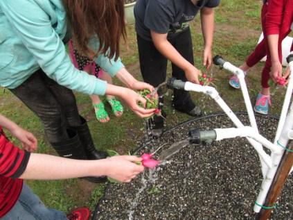handwashing station washing radishes_3908