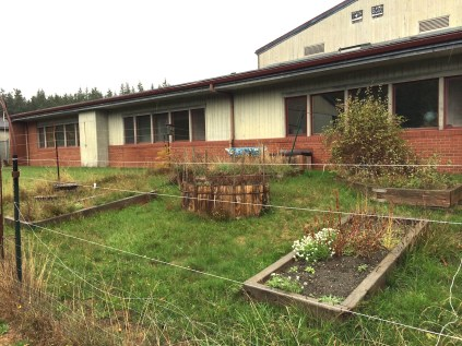 Abandoned garden on the south side of the Elementary School