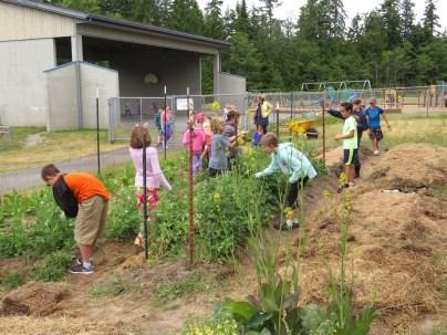 Snack garden students picking veggies_2076