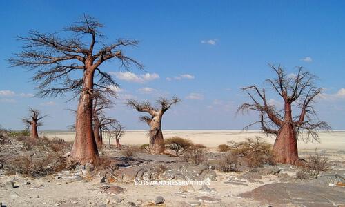 Makgadikgadi Pan National Park