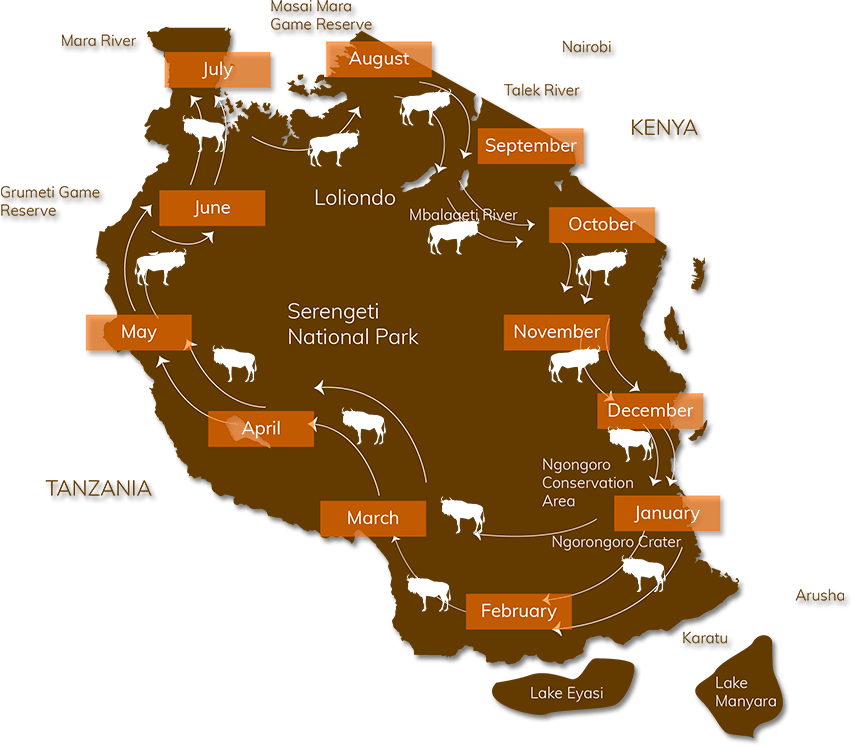 Great Migration Africa Map.The Great Wildebeest Migration Map While In Africa