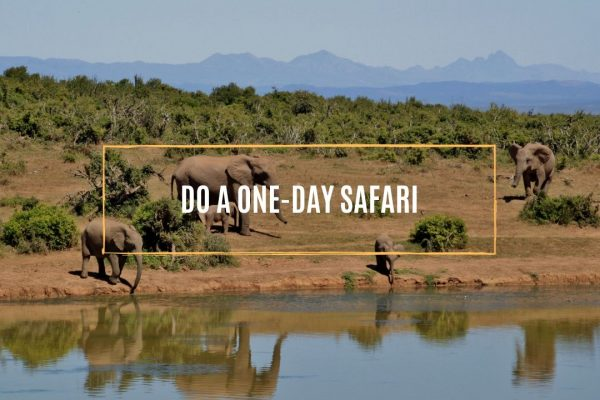 do-a-one-day-safari.whileinafrca