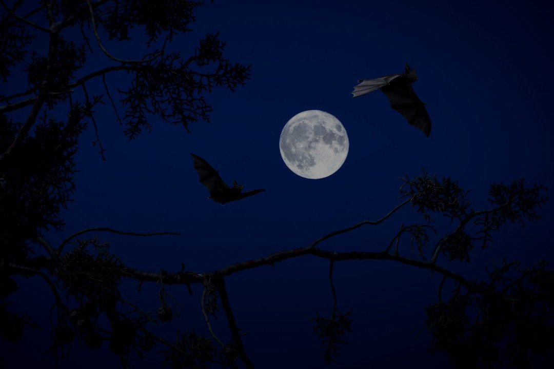 flying bats.whileinafrica