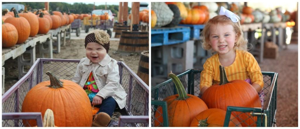 pumpkinpatch20142016