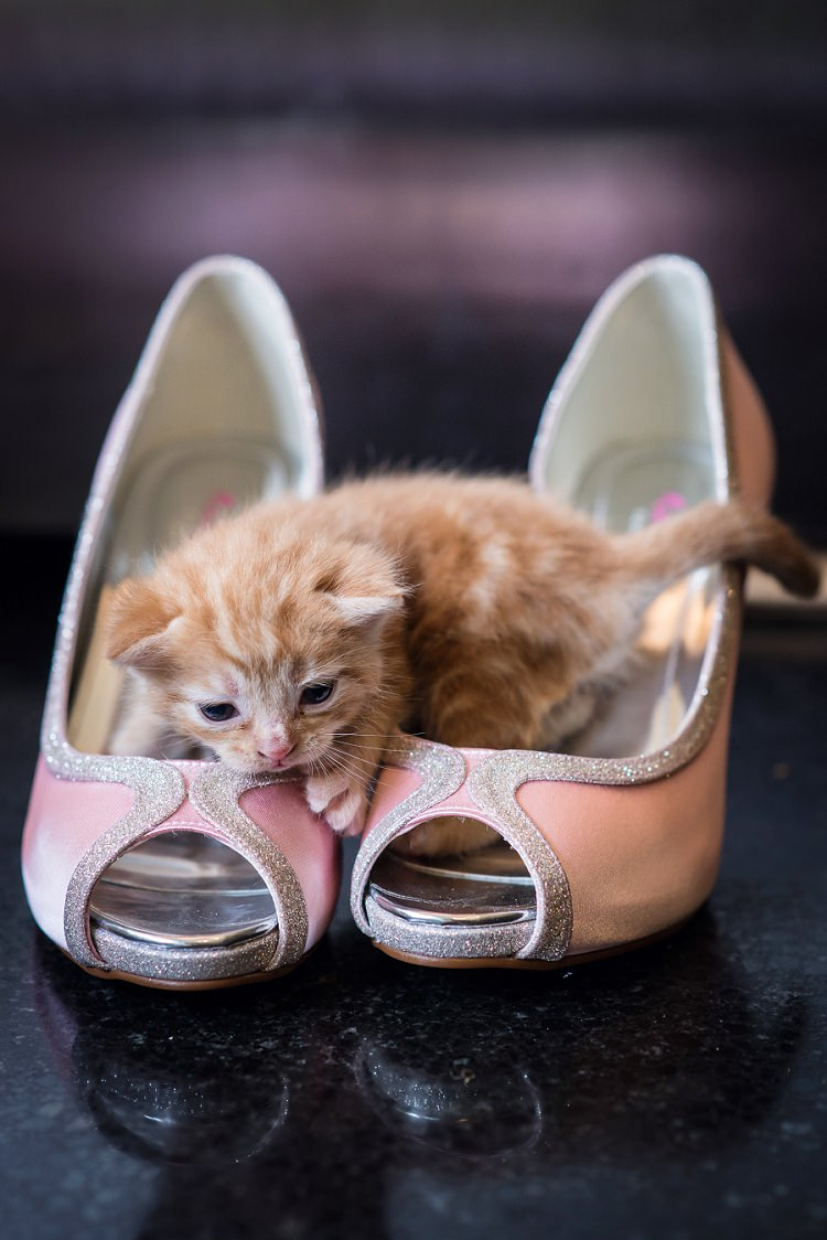 Kitten Cat Wedding Shoes Bride Bridal Whimsical Boho Glamour Pink Blue Gold Wedding http://www.sarareeve.com/