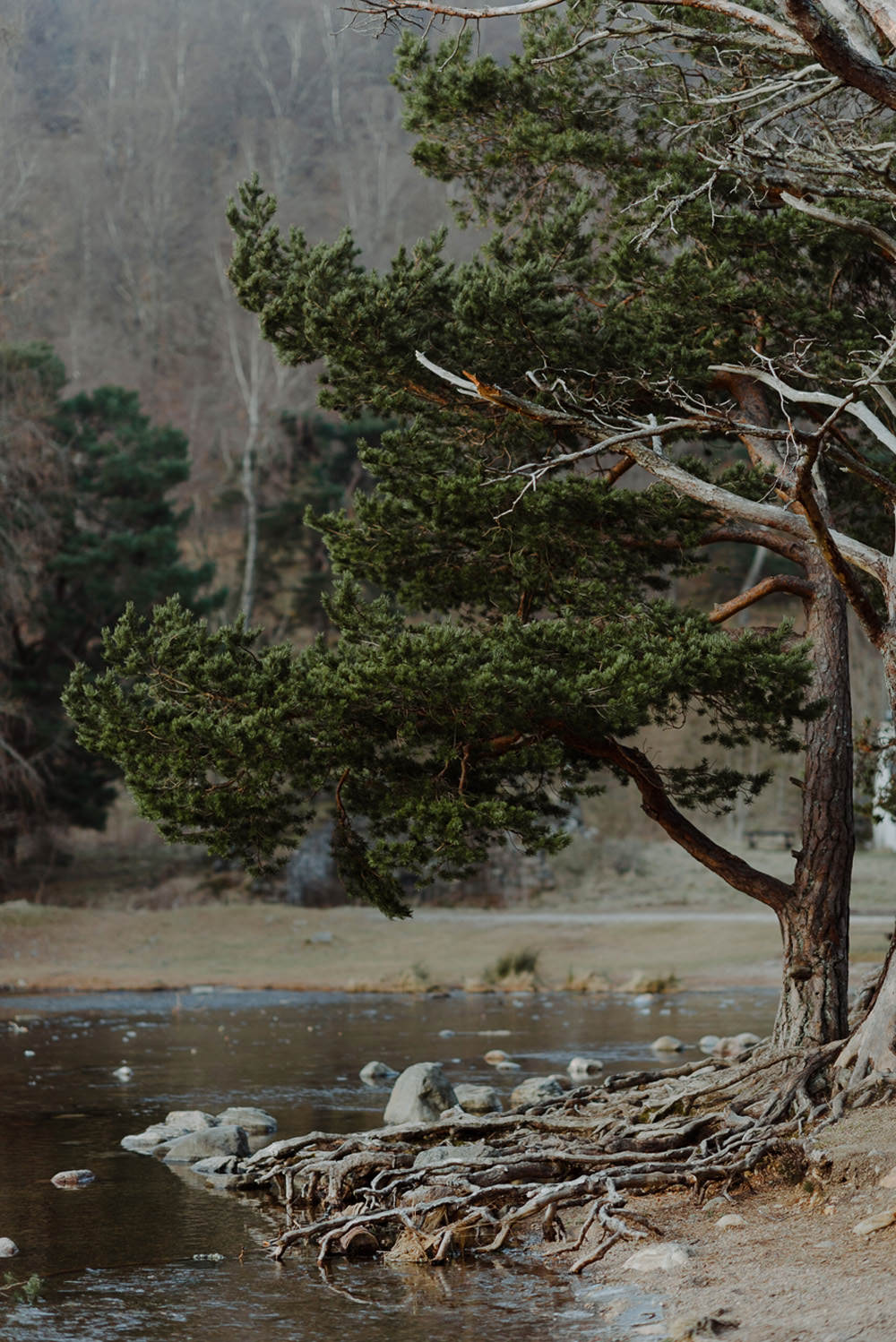 Forest Trees Castle Loch Dramatic Landscape | Intimate Winter Outdoor Scotland Wedding Christopher Ian Photography