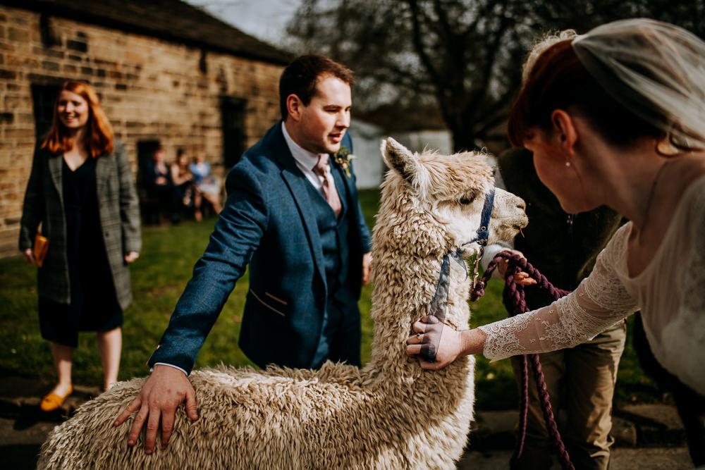 Alpacas East Riddlesden Hall Wedding M and G Photographic