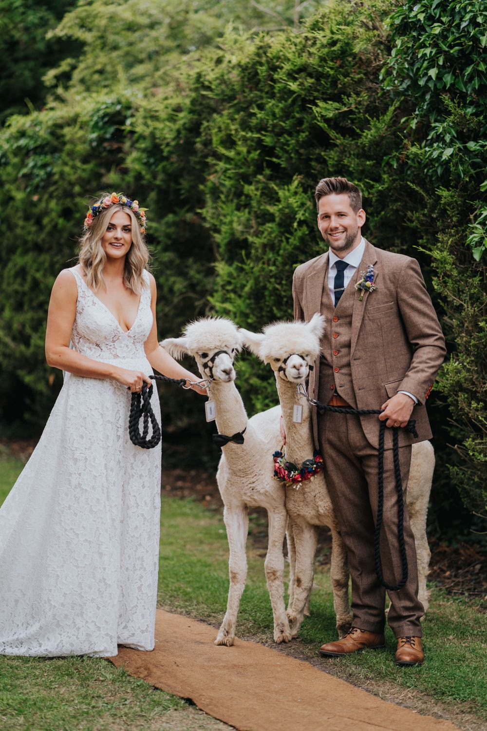 Animal Lovers Wedding Bloom Weddings Alpacas