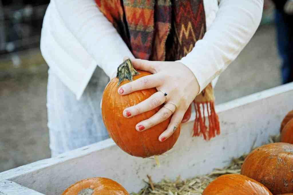 Clancy's Pumpkin Patch San Francsico
