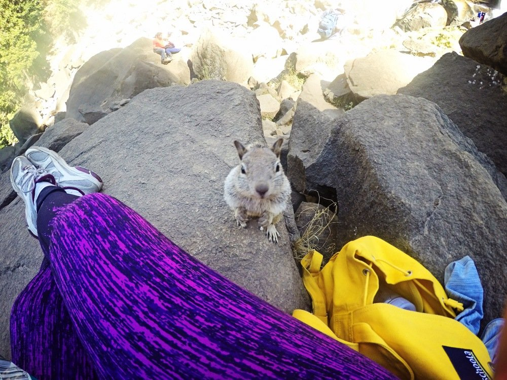 GoPro Squirrel in Yosemite