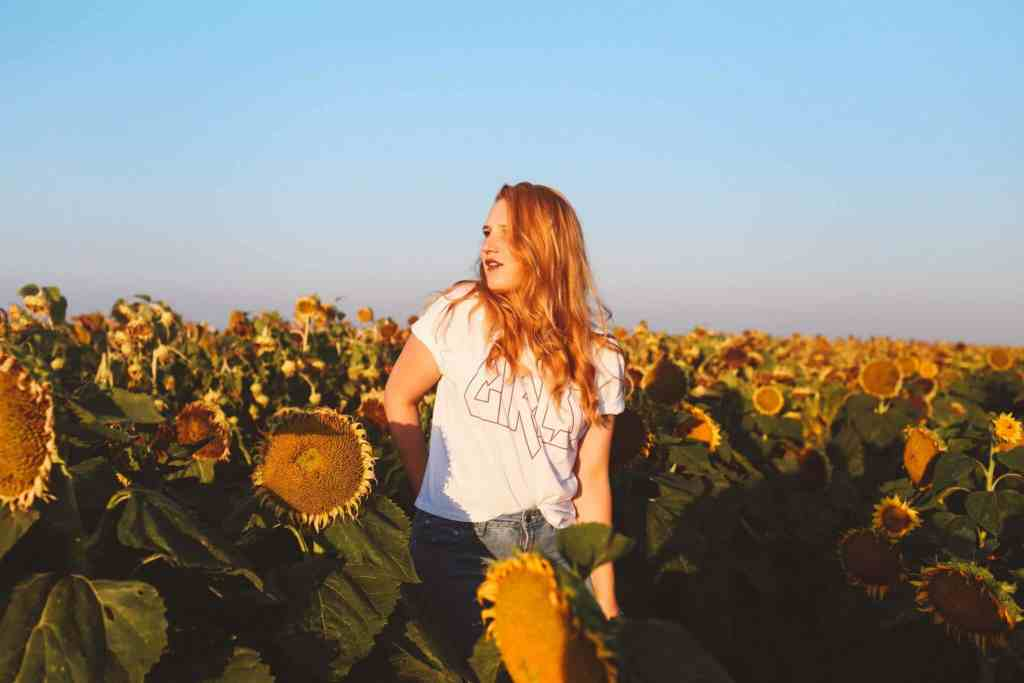 sunflower fields dixon