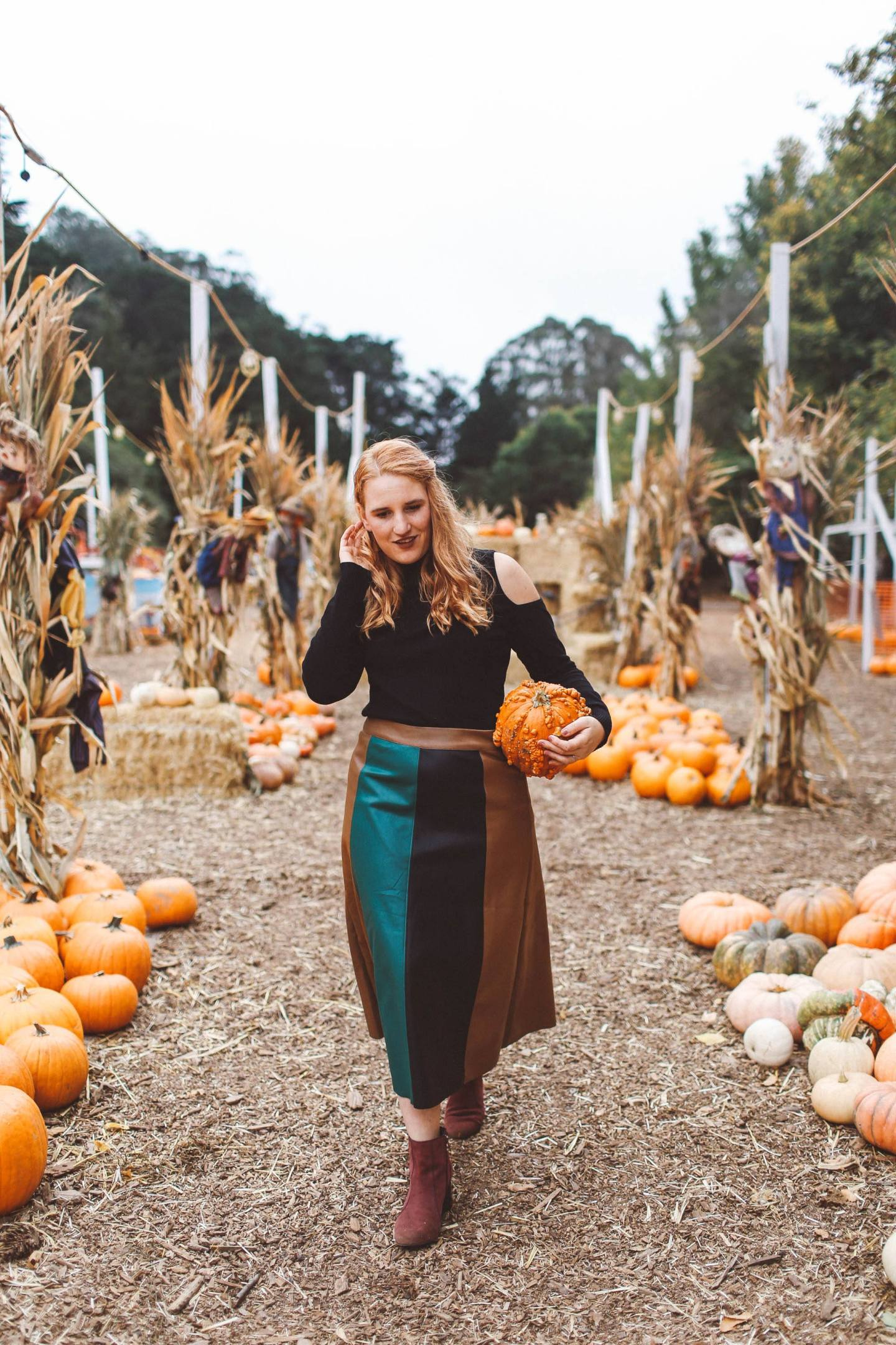 san francisco pumpkin patch