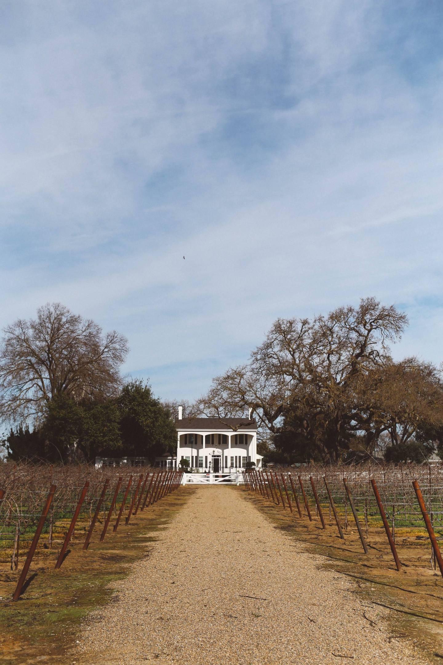 oak farm vineyard lodi