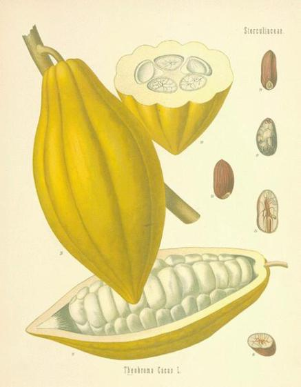 cacao-02a-l