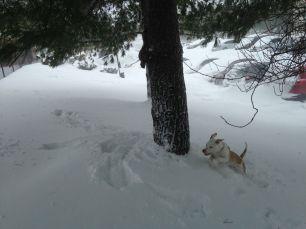 Khaleesi snow