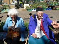Elders violet buying lettace