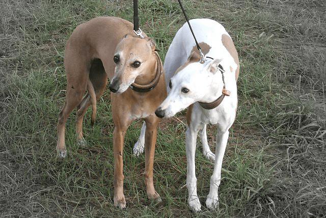 Roxy-and-Diva