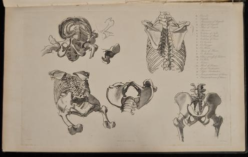 Drawing by Flaxman, engraved by Landseer