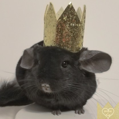 Gold Pet Crown
