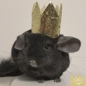 Gold Pet Crown
