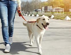 dogwalkingcityhoboken