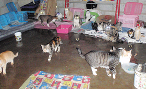 """The cattery: Resident """"mobsters"""" attempt to find a dry spot"""