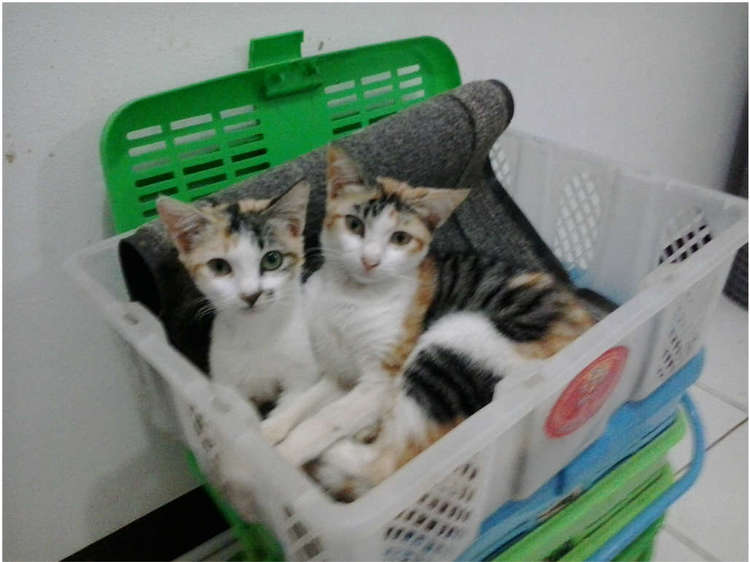 whiskerssyndicate-twin_in_basket