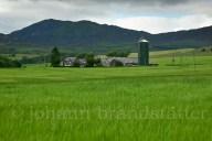 Field of barley near Pitlochry
