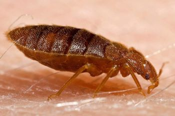 5 Tips to Fight Bedbugs While Travelling. #health