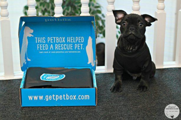 PetBox-January-01