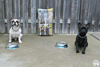 We Are Taking the Nutram Optimum Transition Challenge with Lincoln & Maverick! #NutramOTC