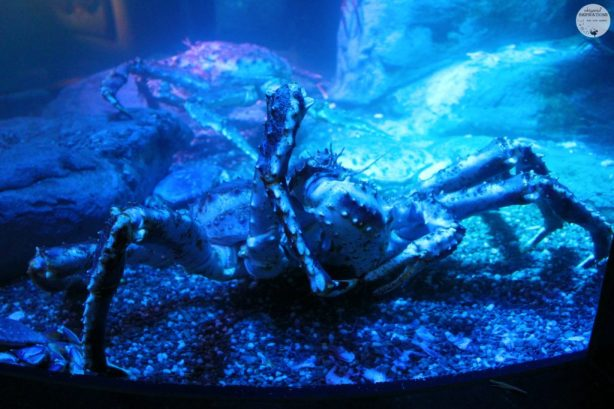 Taking Your Family to Ripley's Aquarium of Canada in Toronto! #travel