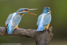 Angrybirds 04_natgeo