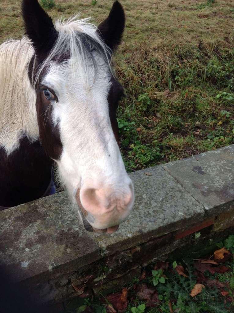 Arthur Findlay College Horses