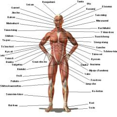 Martial Arts Diagram Guitar Wiring Diagrams 2 Pickups Pressure Points For Whistlekick Point